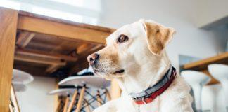 Jak nauczyć psa czystości?