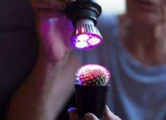 Na jakie żarówki do oświetlenia roślin się zdecydować